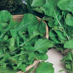 rucola coltivata